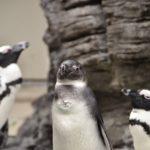ペンギン 漢字