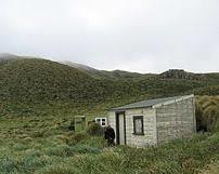 アンティポデス島 ネズミ駆除!世界遺産の景観…人間のエゴと生態系