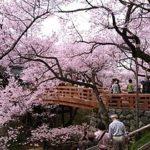 Takato Joushi Park1 150x150 - 高遠城址公園の桜をライブカメラで観賞しよう!!「さくら名所100選」の華麗な姿