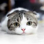 """32187 main2 150x150 - 猫の鳴き声 平安時代は""""ねんねん""""に口コミは「かわいい」の評価"""