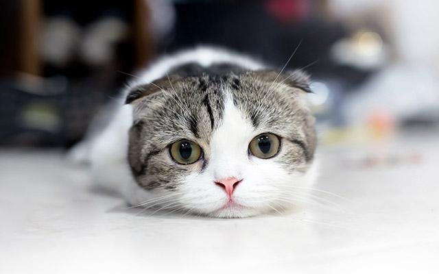 """猫の鳴き声 平安時代は""""ねんねん""""に口コミは「かわいい」の評価"""
