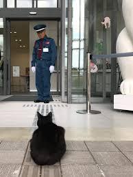 尾道市立美術館 黒と茶トラの可愛い訪問者にファンがメロメロ
